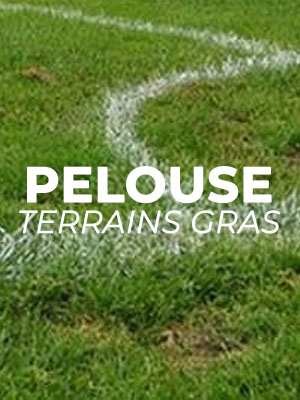 Terrain de Football pelouse grasse